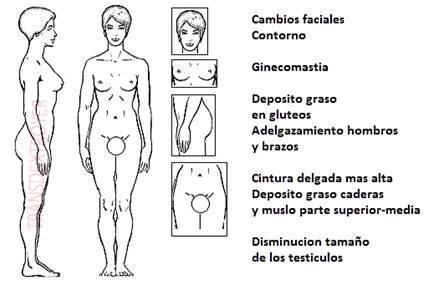 Efectos del estrógeno en el cuerpo